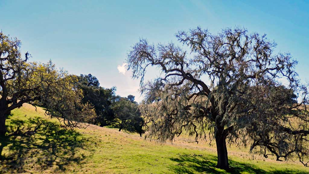 Solvang is in the Santa Ynez Valley and is surrounded not only by wineries but also beautiful pastures, some with horses and some with cattle.